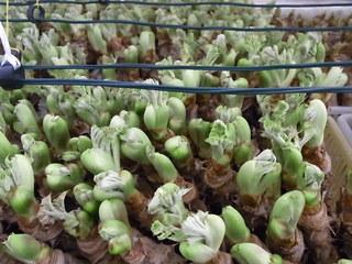 2011今年出会った野菜たち